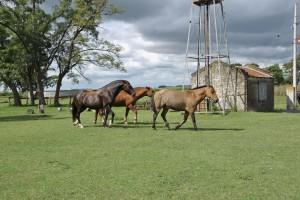 Arbeitsalltag auf einer argentinischen Ranch