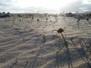 Sanddünen in der näge von Corralejo