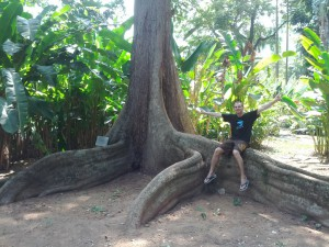 Rio_Botanischer_Garten