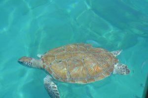 klares Wasser und Schildkröten
