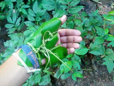 Handverletzung mit Bambusblättern behandeln