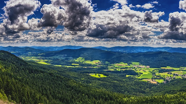 Bayersicher Wald