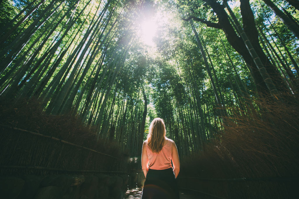 kyoto-bambus-garten