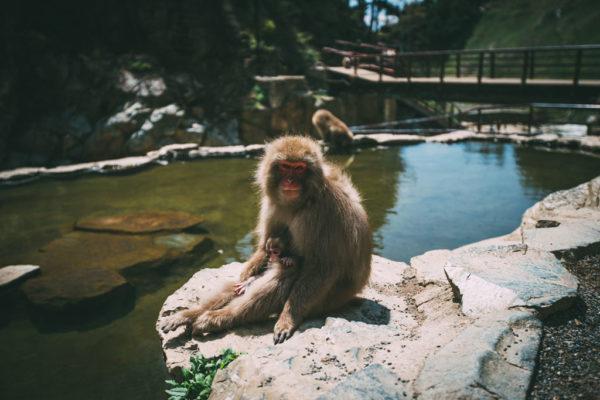 makaken